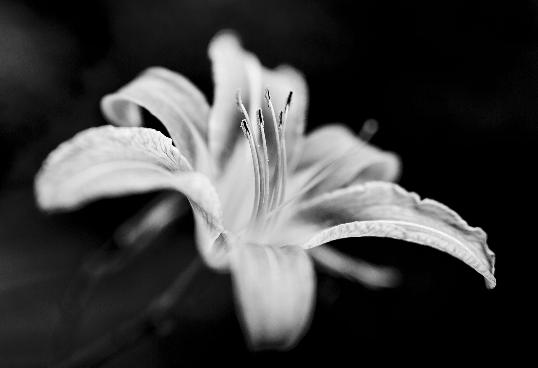 flower-bw-